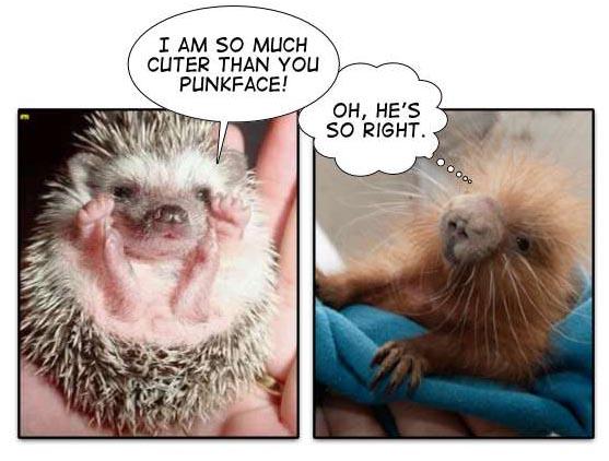 IMAGE(http://www.spudart.org/blog/images/2005/porcupine_baby_war.jpg)