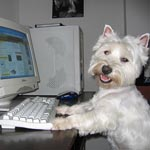 Does your dog have an email address?