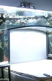 Questions for Chad Ochocinco about his aquarium bed