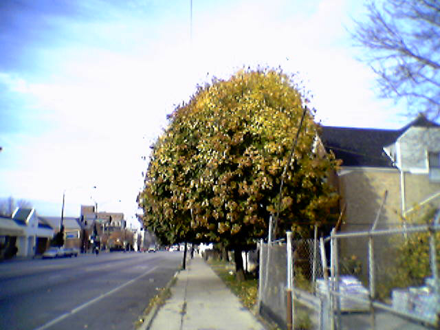 Between bell and oakley is one of my favorite trees. It's so full!