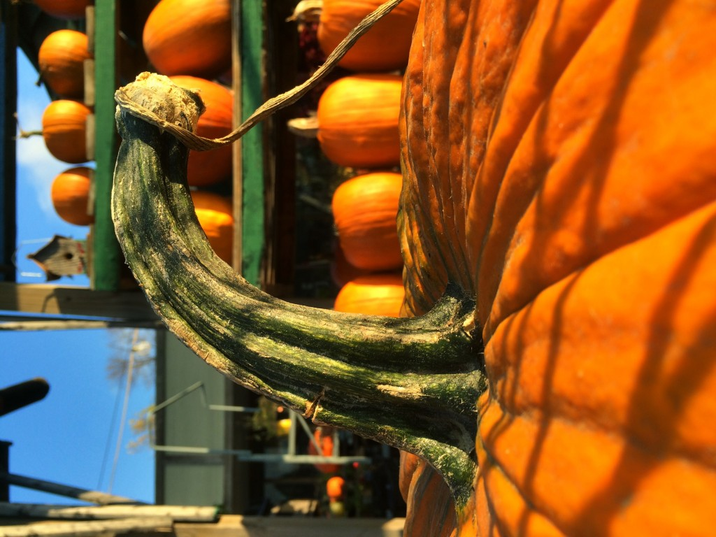 Pumpkins are here!