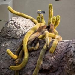 You're the dreadlock cactus by Jason DeVoll