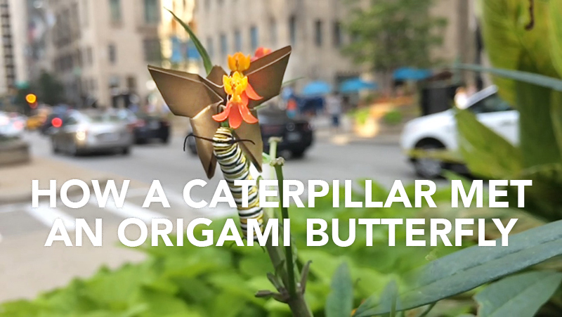 How a caterpillar met an origami butterfly