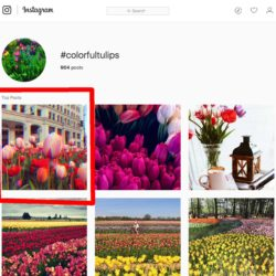 colorfultulips-instagram-hashtag