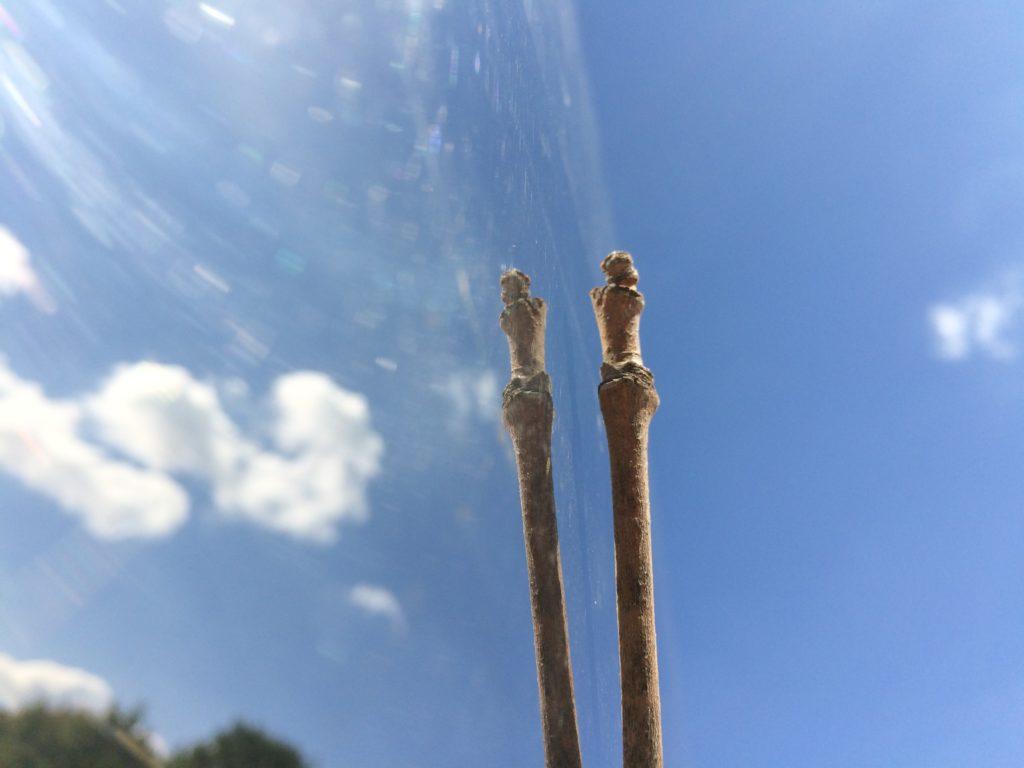 Sylvester Stick in Chicago Bean reflection