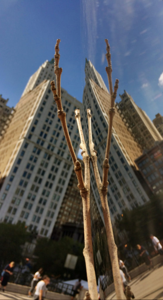 Sylvester Stick as insect in Chicago Bean reflection