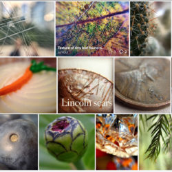 photos taken with iphone and macro lens