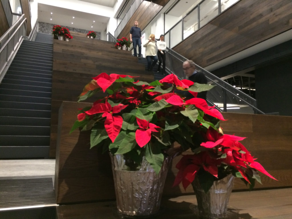 Christmas poinsettia in the Chicago Tribune stairs for Christmas