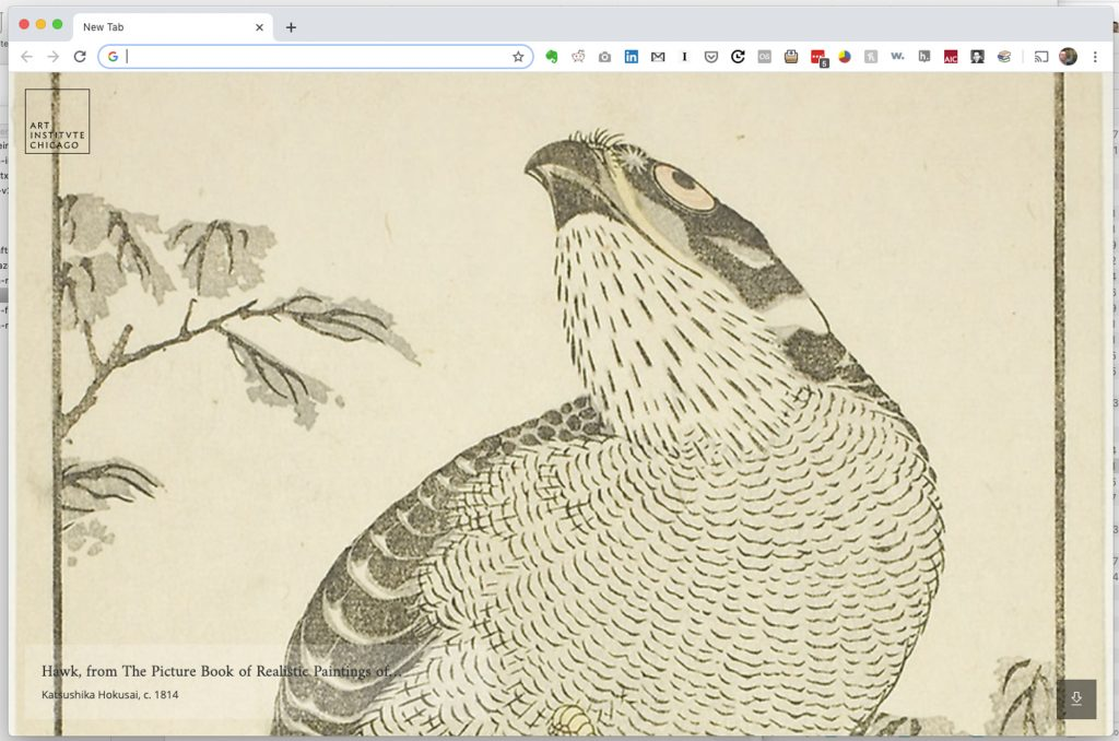 Hawk, from The Picture Book of Realistic Paintings of Hokusai (H