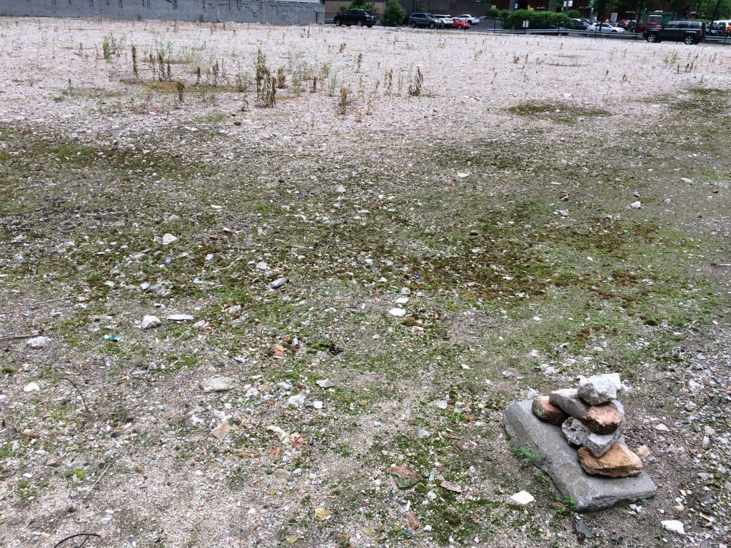 Plants growing in empty lot at 130 North Franklin St, Chicago