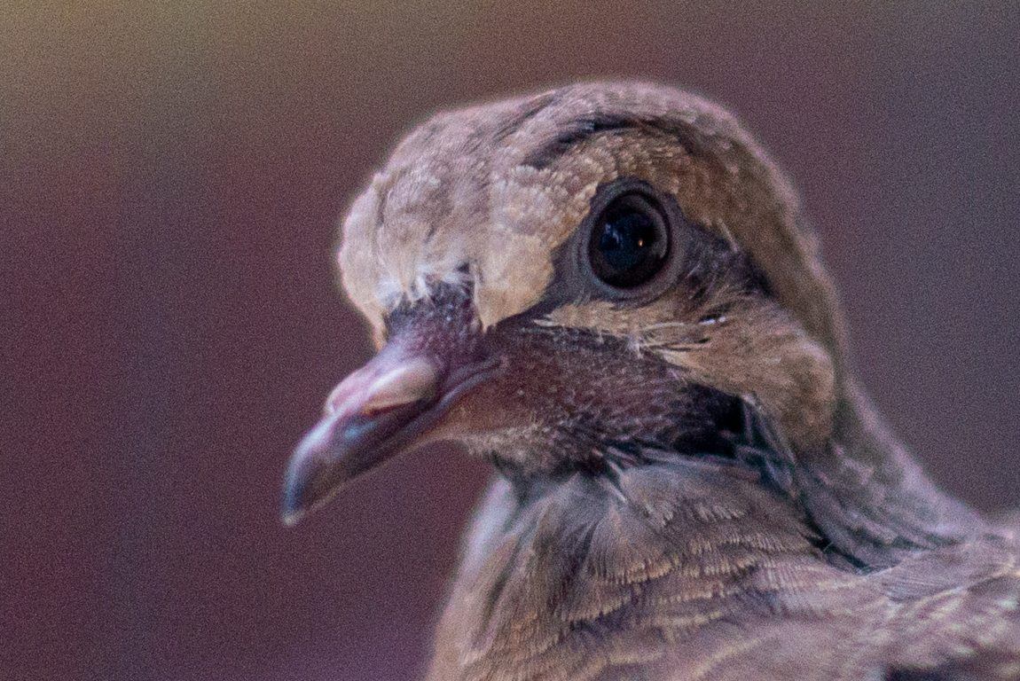 Here's a close-up of the baby bird's face.